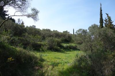 land-for-sale-2