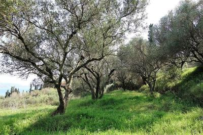 land-for-sale-11