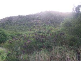 Image No.2-Terre à vendre à Falmouth