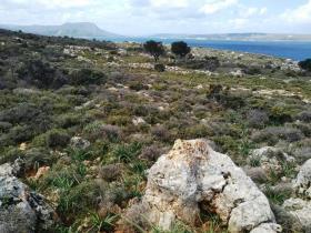 Image No.1-Terre à vendre à Apokoronas