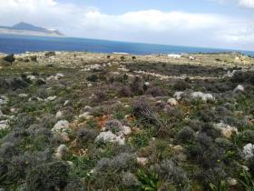 Image No.4-Terre à vendre à Apokoronas