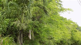 Image No.7-Terre à vendre à Marigot Bay