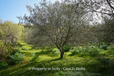 Villa-frassino-pollina-sicily-property-to-buy-40
