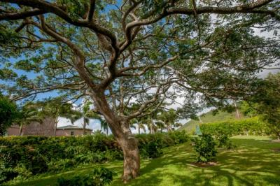 22-Giant-Samaan-tree-in-the-orchard--4254