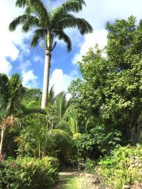 Palm-Terrace-Gdn-1