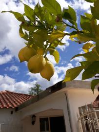 citroen-boom